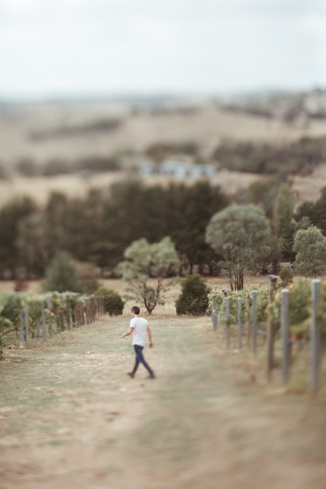 Walking through vineyard